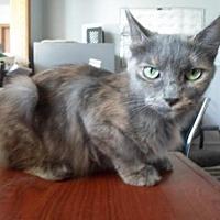 Adopt A Pet :: Ashes - Montello, WI