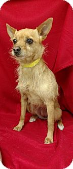 Terrier (Unknown Type, Medium) Mix Dog for adoption in Redding, California - Maggie Mae($75)