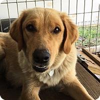 Adopt A Pet :: Megan - Wharton, TX