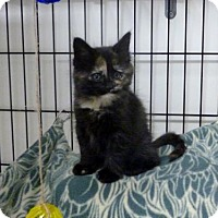Adopt A Pet :: Gretchen - Diamondville, WY