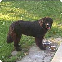 Adopt A Pet :: Harley - Evansville, IN