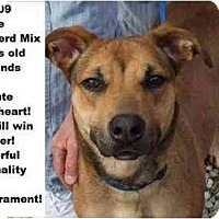 Adopt A Pet :: # 848-09 - ADOPTED! - Zanesville, OH