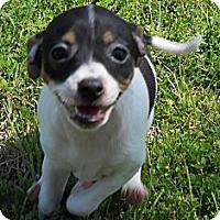 Adopt A Pet :: Miss Honeydew - Oklahoma City, OK