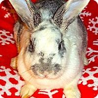Adopt A Pet :: Noelle - Santee, CA