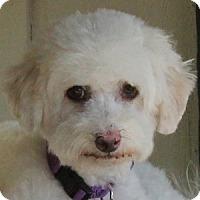 Adopt A Pet :: Sawyer - La Costa, CA