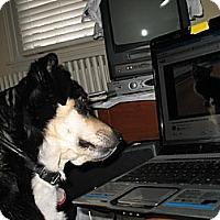 Adopt A Pet :: Thelma - Doylestown, PA