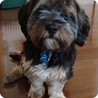 Adopt A Pet :: Max - Denver, IN