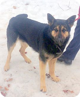 Shepherd (Unknown Type) Mix Dog for adoption in Bloomfield, Connecticut - William