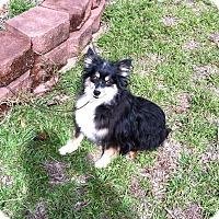 Adopt A Pet :: Tyke - Columbia, SC