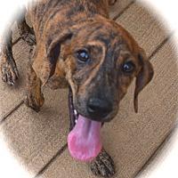 Adopt A Pet :: Loretta - Ijamsville, MD