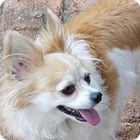 Adopt A Pet :: Gizmo - San Diego County, CA