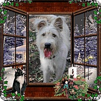 Adopt A Pet :: Aidan - Crowley, LA