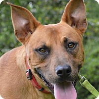 Terrier (Unknown Type, Medium) Dog for adoption in Lafayette, Louisiana - Lucky