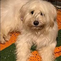 Adopt A Pet :: Precious - BONITA, CA