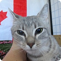 Adopt A Pet :: Tutti - Lloydminster, AB