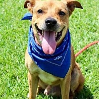Adopt A Pet :: Happy - Waggaman, LA