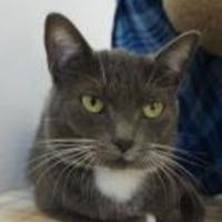Adopt A Pet :: Angelica - Eugene, OR