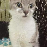 Adopt A Pet :: Faith - Landenberg, PA
