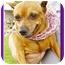 Photo 1 - Miniature Pinscher Dog for adoption in North Palm Beach, Florida - Lee