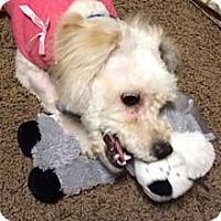Adopt A Pet :: Bailey!! - Whittier, CA