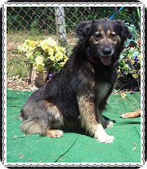 Collie Mix Dog for adoption in Marietta, Georgia - OLIVIA (R)