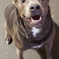 Adopt A Pet :: Joy - Conroe, TX