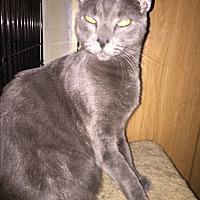 Adopt A Pet :: Jerry - Monrovia, CA