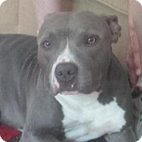 Adopt A Pet :: ELLIOT - Kimberton, PA