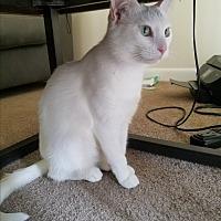 Adopt A Pet :: Sophia - Parkton, NC