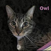 Adopt A Pet :: Owl - East Stroudsburg, PA