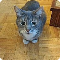 Adopt A Pet :: Ava - Foster - Toronto, ON