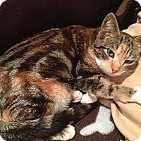 Adopt A Pet :: Natasha - East Hanover, NJ