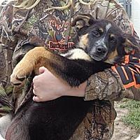 Adopt A Pet :: Becca - Crawfordville, FL