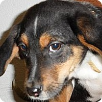 Adopt A Pet :: Mulberry - Seattle, WA