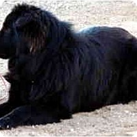Adopt A Pet :: Arby - Scottsdale, AZ