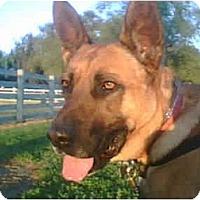 Adopt A Pet :: Kyle - Bakersfield, CA