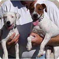 Adopt A Pet :: BERT & ERNIE - Phoenix, AZ
