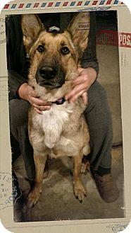German Shepherd Dog Mix Dog for adoption in Los Angeles, California - VIKI