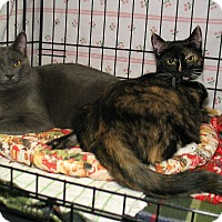 Adopt A Pet :: Heather and Heron - Milford, MA