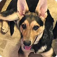 Adopt A Pet :: Riese - Parker Ford, PA
