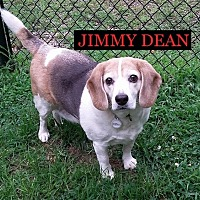 Adopt A Pet :: JIMMY DEAN - Ventnor City, NJ