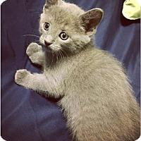 Adopt A Pet :: Asher - Sanford, NC