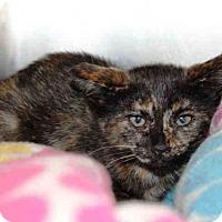 Adopt A Pet :: KILEY - Hampton Bays, NY