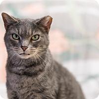 Adopt A Pet :: Pixie - Aldie, VA