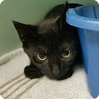 Adopt A Pet :: Twilight - Bloomingdale, NJ