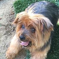 Adopt A Pet :: JESSE - Oakland, CA