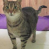 Adopt A Pet :: George - Reeds Spring, MO