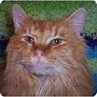 Adopt A Pet :: Duffy - Arlington, VA