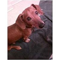 Adopt A Pet :: Chance - NJ - Jacobus, PA