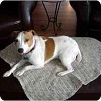 Adopt A Pet :: Rudy - Omaha, NE